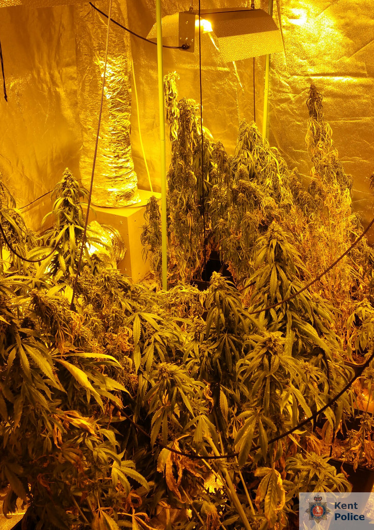 Police uncovered a cannabis factory in The Broadway, Herne Bay